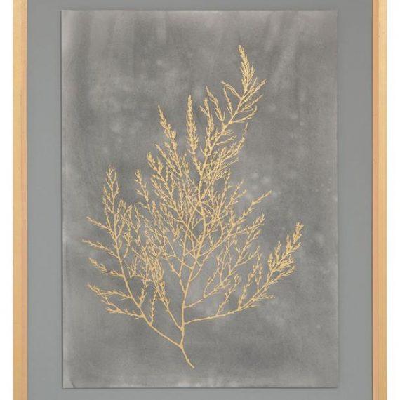 Gold foil algae II on black – JR